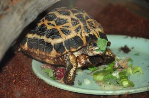 hungryturtle