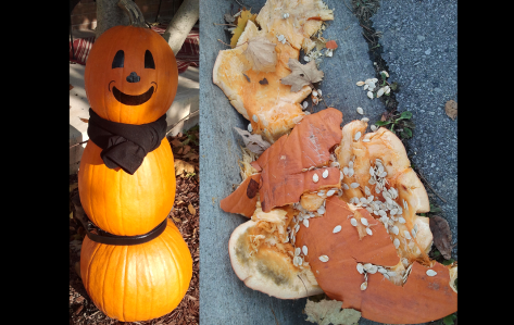 Our pumpkin snowman in happier times, and this morning's crime scene.